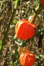 fleursaot2008003petit.jpg