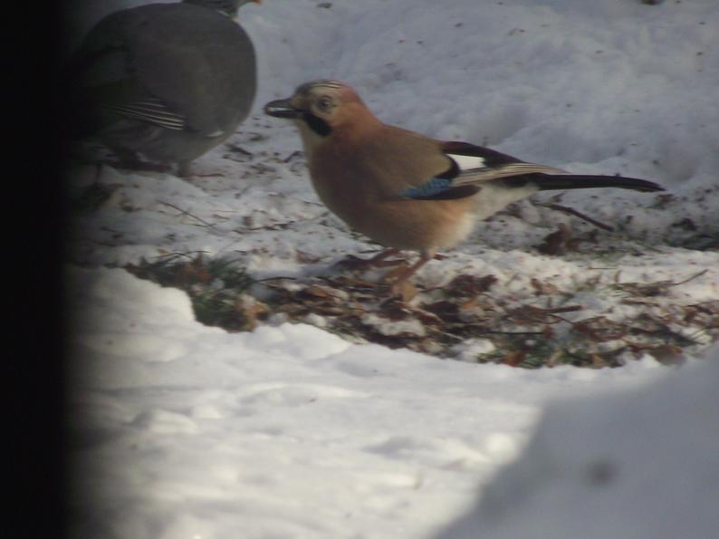 oiseaux4.jpg