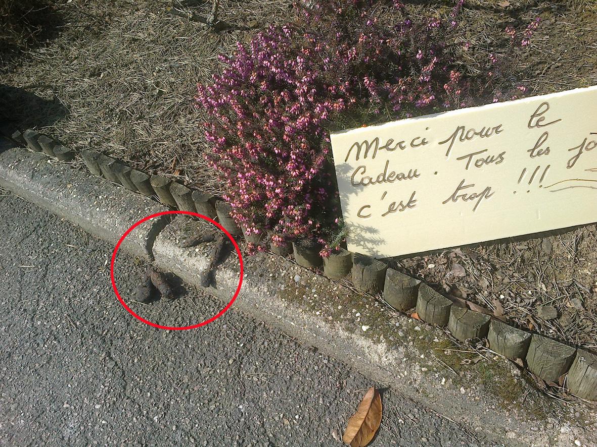 Merde alors ecrivain public zaz et plus - Crotte de chien dans le jardin ...