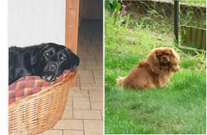 Lorca et Véga au Paradis des chiens…
