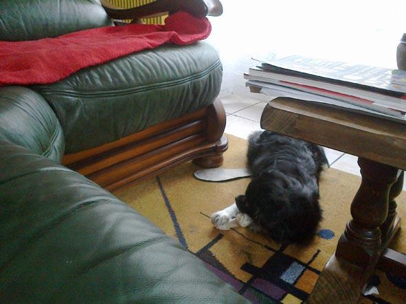26122012518-petit chien dans Photos