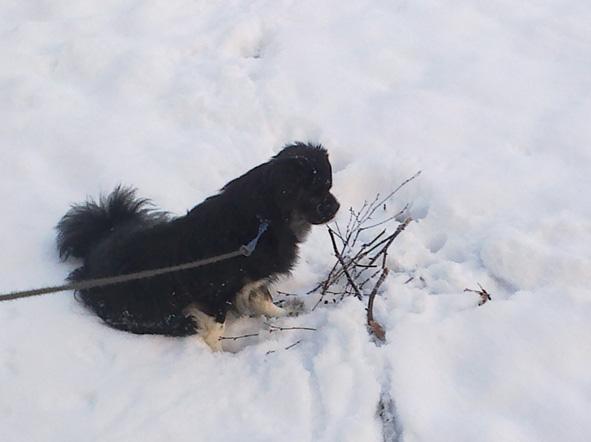 Hella : même pas froid ! dans Hella 16012013541-petit