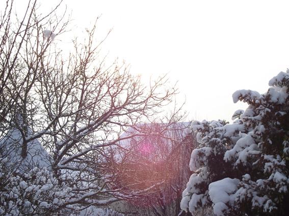 dscf0284-petit neige dans Photos