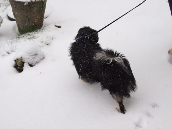 Hella et la neige dans Hella dscf1625-petit