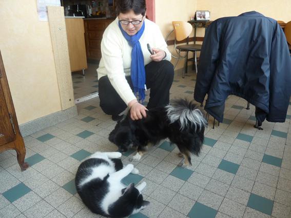 p1040120-petit chat dans Hella