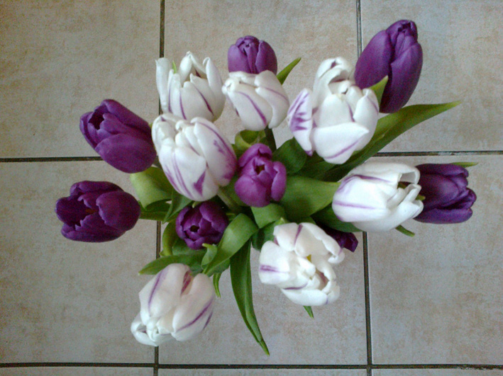 Un bouquet de tulipes... dans Divers tulipes