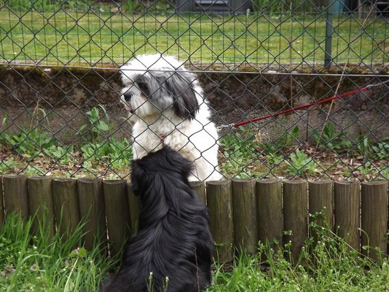 Snoopy, le copain de Hella dans Hella dscf0680-petit
