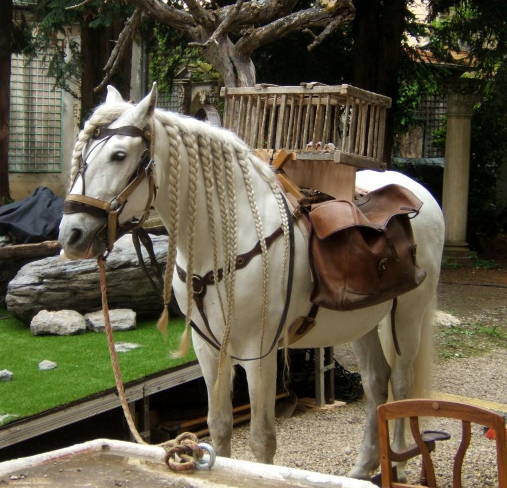10-le-cheval-natte