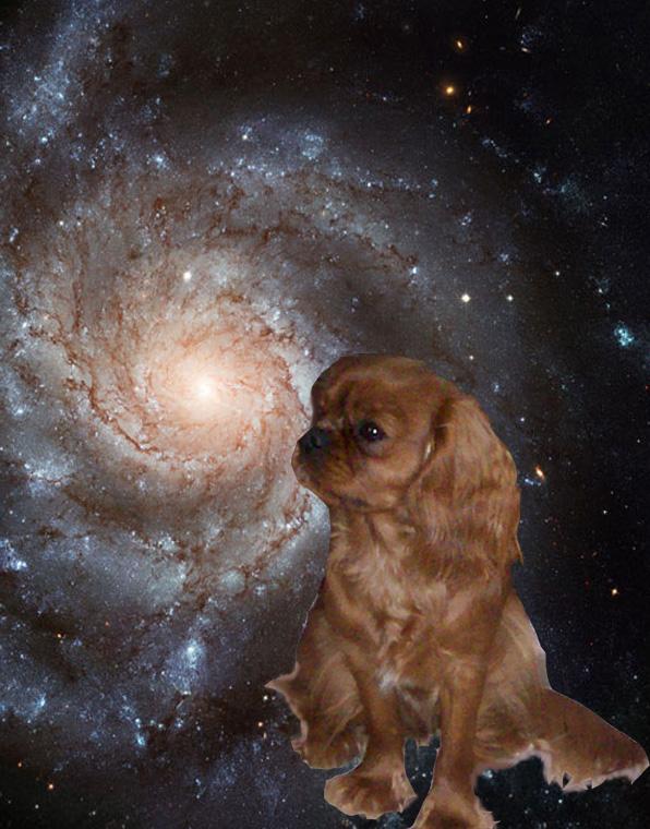 Il y a un an... dans Emotion vega-sous-constellation
