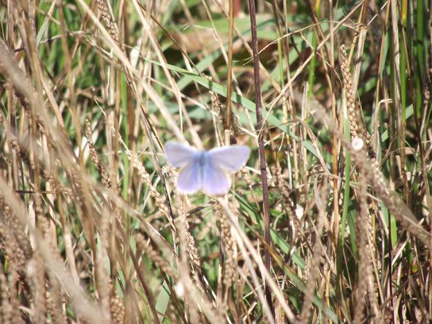 Balade sur le chemin Gauguin au Pouldu dans Photos dscf0852-petit