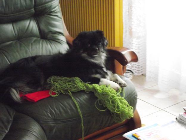 dscf0968-petit chien dans Photos