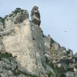 Les Gorges du Tarn juin 16